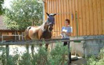 Beste Bedigungen im Reiterhof Reglauer für Ihr Pferd - www.reiterhof-reitstall-muenchen.de