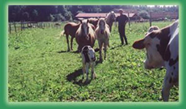 Pferdezucht Reglauer in Starnberg Wangen 04 - www.reiterhof-reitstall-muenchen.de